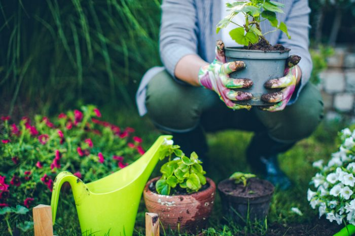 How to Add Value to Your Garden