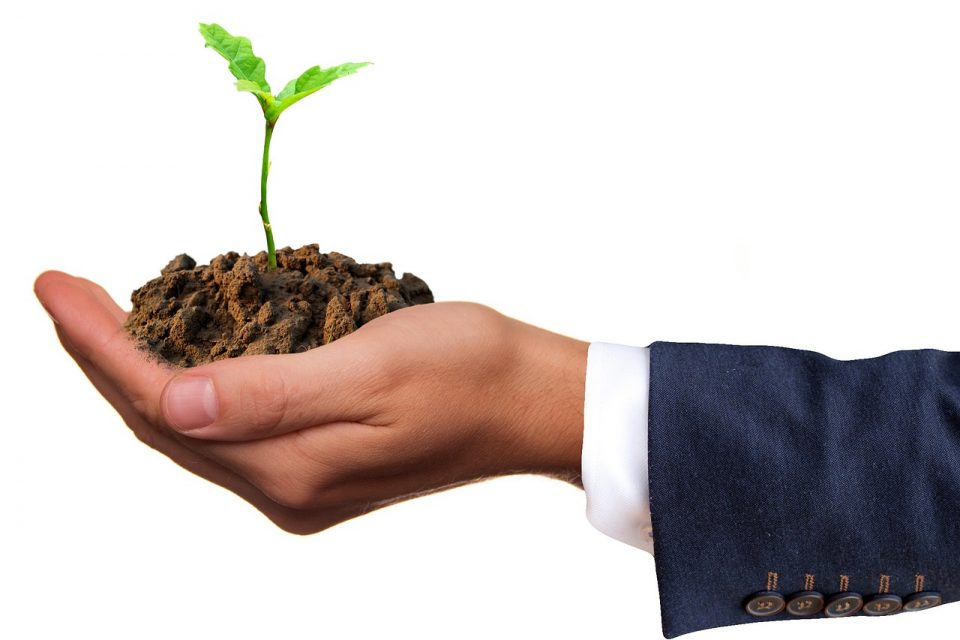Top Tips for Starting A Gardening Business