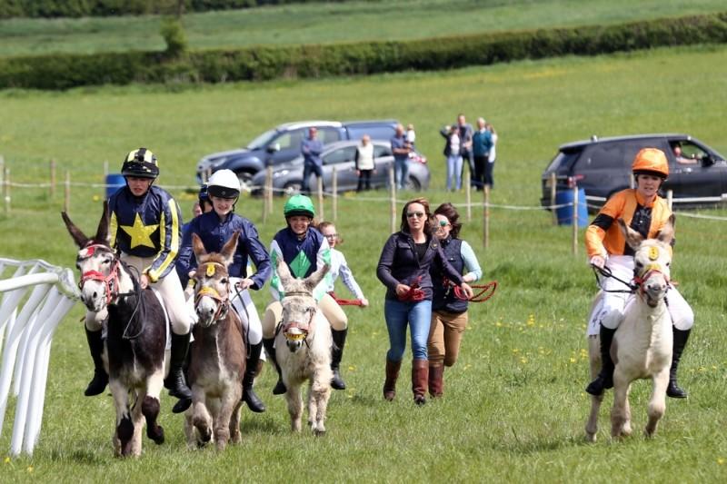 donkey racing weird bets